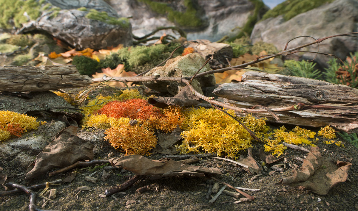 Fall Mix Lichen